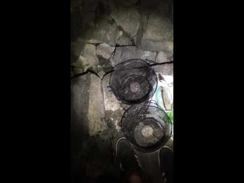 Columbia crawfish trapping PART 2