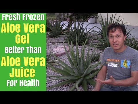 Fresh Frozen Raw Aloe Vera Gel that is Better than Aloe Vera Juice for Health Benefits