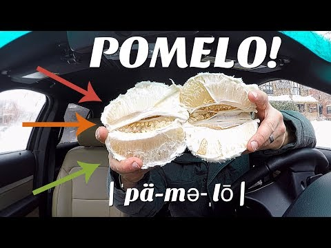 THE POMELO - THIS WEEK'S BIZARRE FRUIT!