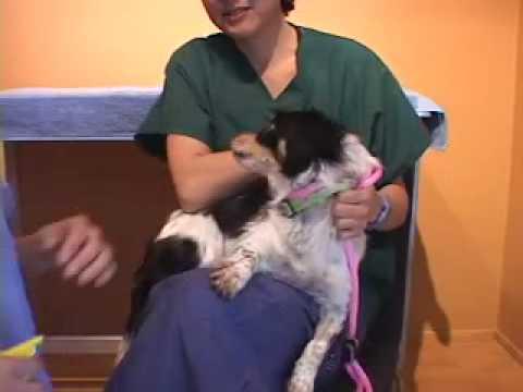 Dog Aggressive for Toenail Trim | drsophiayin.com