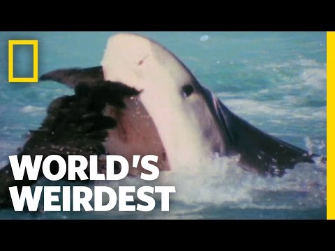 Albatross vs. Shark | World's Weirdest