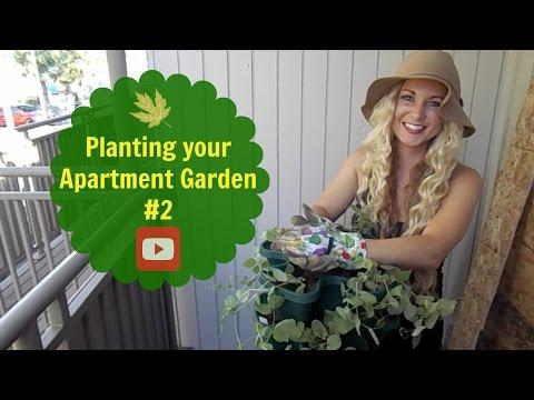 Planting your Apartment Garden #2