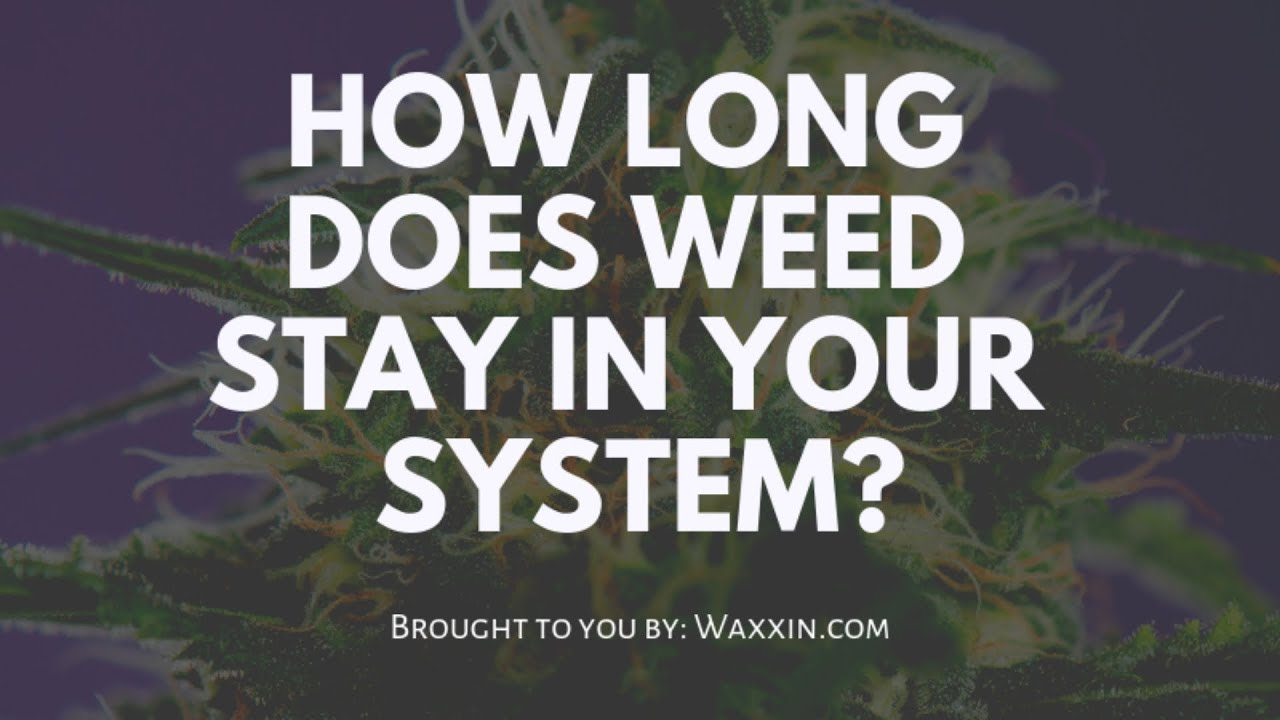 How long does weed stay in your system (to pass a drug test)