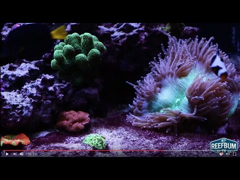 Will a 3 Day Black Out Eliminate Algae in a Reef Tank?
