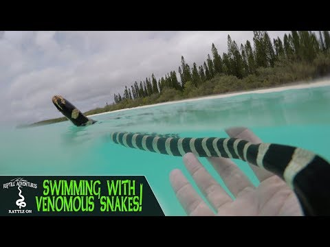 SWIMMING WITH VENOMOUS SNAKES! (New Caledonia, 2018)