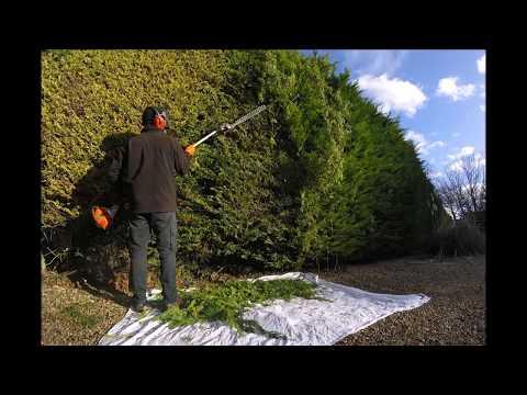 Cutting a Big hedge.  Part 1