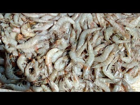 Big Prawns Shrimps in My Street | Fresh Farmed Indian Tiger Prawns Cleaning Shrimp Videos
