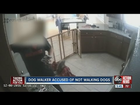 Family says dog walker didn't walk dogs