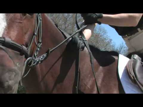 Controlling a Galloping Horse