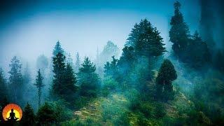 3 Hour Zen Meditation Music: Nature Sounds, Relaxing Music, Calming Music, Healing Music, ✿071C