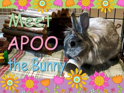 Apoo the bunny cannot stop chewing toilet paper roll...
