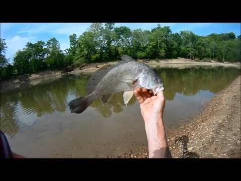River Fishing #1,Freshwater Drum on Nightcrawlers