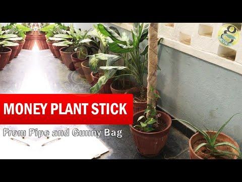 How to make Money Plant climber Stick | Money plant stick - Grow Faster from Gunny Bag