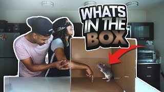 Whats In The Box Challenge gone Wrong