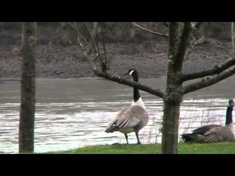 First video with new FS100 Canon camcorder