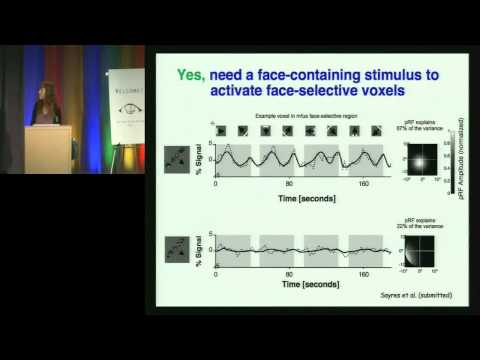 Bay Area Vision Meeting: Position-Dependent Face Processing: Insights from the Human Brain