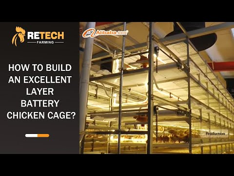 Farming Port-How to build an excellent layer battery chicken cage?
