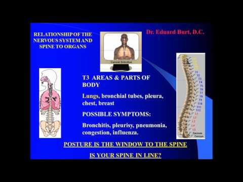 SPINE, NERVOUS SYSTEM AND ITS RELATIONSHIP TO INTERNAL ORGANS