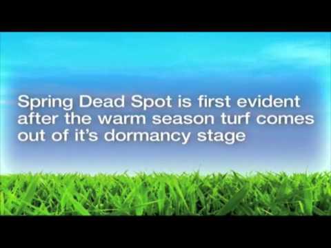 Spring_Dead_Spot