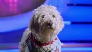 Pup Star - Bark VS Charlie