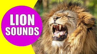 LION SOUNDS | Learn Animals with Kiddopedia #Shorts