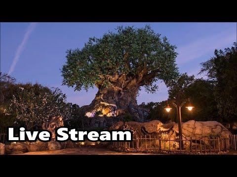 Animal Kingdom 360 Live Stream - 2-2-18 - Walt Disney World