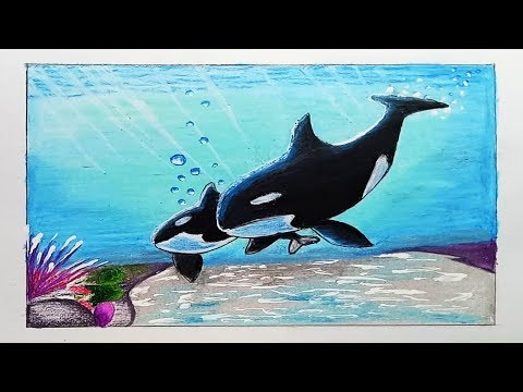 How to draw orca/killerwhale with Oil Pastel.Step by step(easy draw)