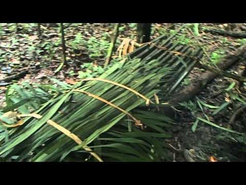 Jungle survival shelter