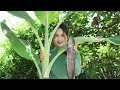 Awesome Cooking Banana Tree With Big Fish Recipe Delicious In My Village - Village Food Factory
