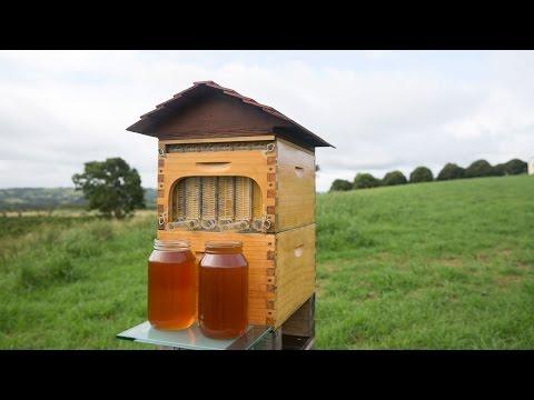 Flow™ Hive Full Reveal