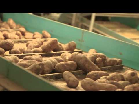 Employment in the Food Manufacturing Industry — Midwest Food Processors Association