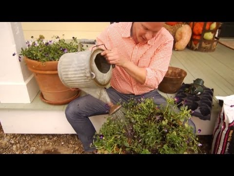Planting Tulip Bulbs in Containers | At Home With P. Allen Smith