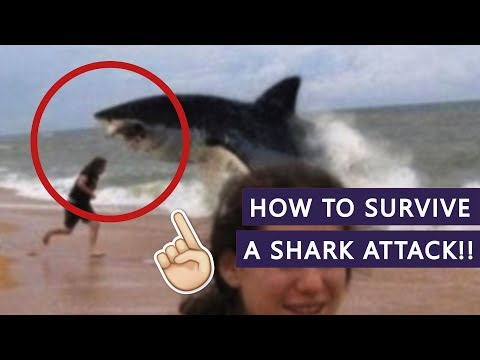 HOW NOT TO GET EATEN BY A SHARK!