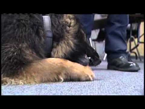 'Michael Jordan Of Police Dogs' Sniffs Out Drugs In Southern Ind.