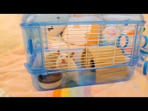 Vanilla's new cage (April fools! 😉)