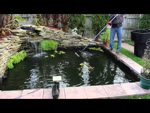 Cleaning & Preparing the  Koi Pond for Winter 2015