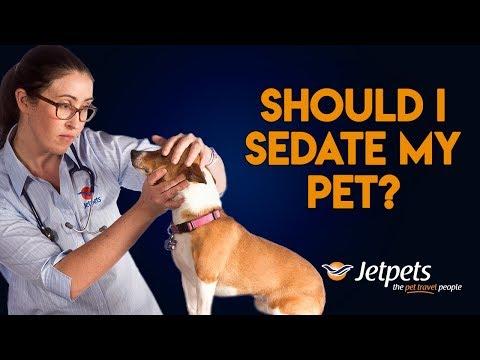 Should I Sedate my Pet for Travel?