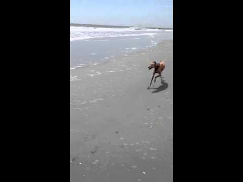 Best Bud on the Beach