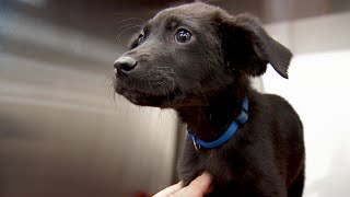 This Poor Little Pup Might Lose His Leg | Dr. Jeff: Rocky Mountain Vet