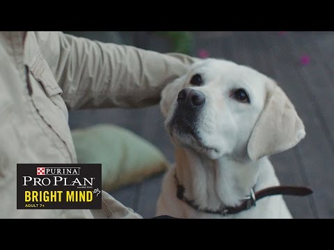 When A Guide Dog Retires// Presented By BuzzFeed & Purina Pro Plan Bright Mind