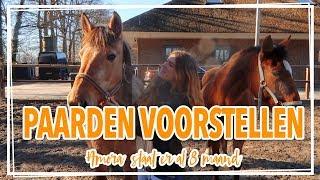 Al Onze  20 Paarden Voorstellen Op Stal !!