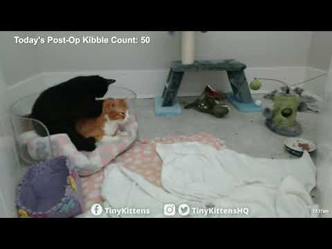 Ramona invades Chloe's purrsonal space - TinyKittens.com