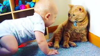 A Cute Baby And A Cat 😹 Adorable Babies Playing With Cats