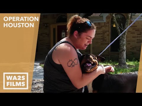 This Woman Couldn't Get Her Dogs Back From Houston SPCA After Hurricane - Howl & Hope For DoDo Dogs