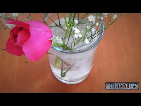 Flores vivas mas tiempo(  Flowers live longer)
