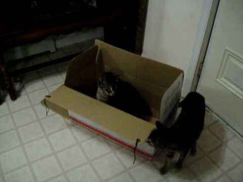 Blind and deaf cat in box