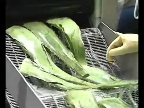 Forever Living Products     Aloe vera based products & opportunity worldwide mp4