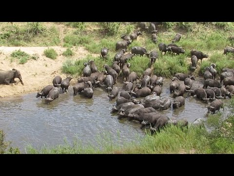 Wild Animals Sharing Water Hole Together