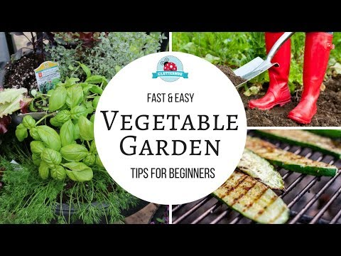 How to Grow a Vegetable Garden - Easy Tips for Beginners