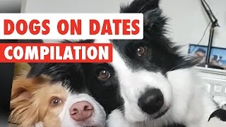 Dogs On Dates Video Compilation 2017